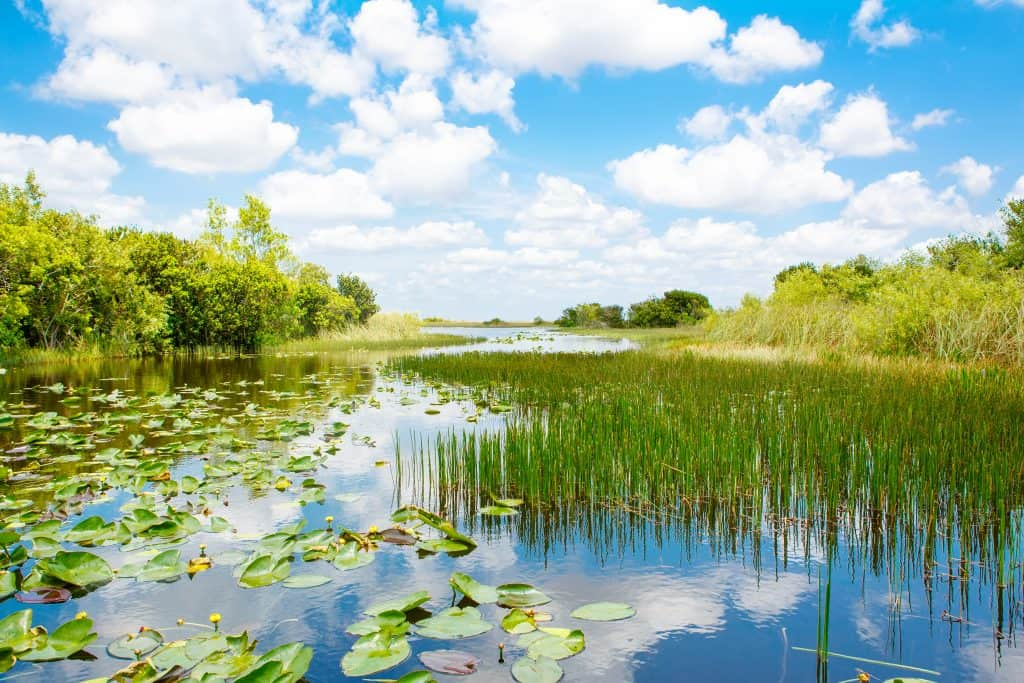grass-filled waters of the Florida Everglades National Park
