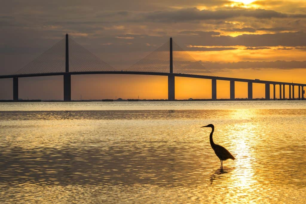 golden sunset with bridge over water and bird