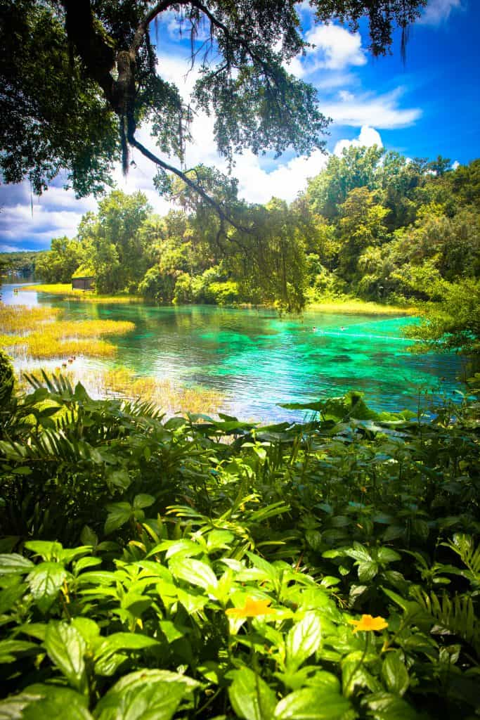 greenery surrounding turquoise water topped with grass patches