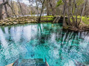 weeki wachee springs on your florida road trip