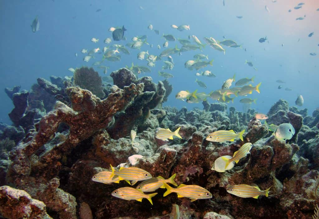 Hidden gems Florida reef filled with sunlight and fish.