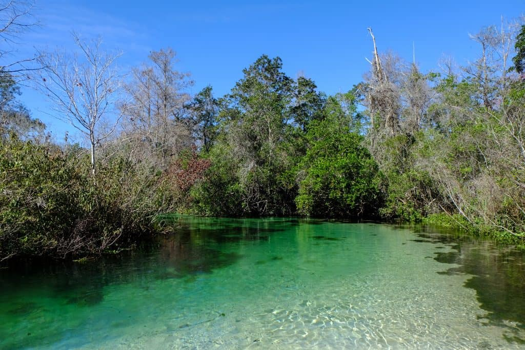Hidden gems florida weeki wachee clear river lined wth trees.