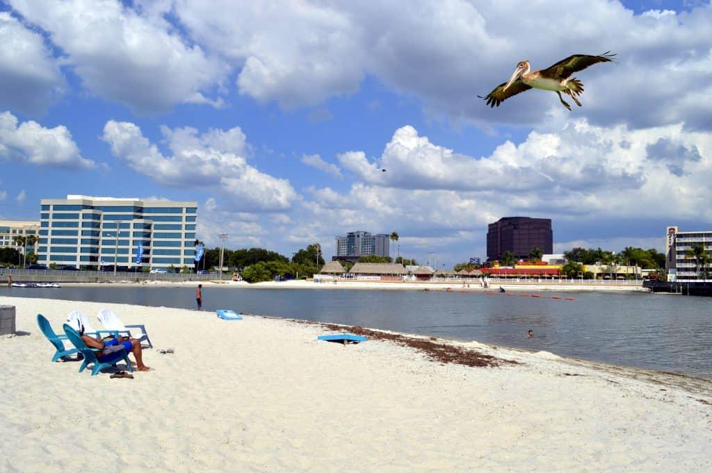 pelican flying over Ben T Davis beach, one of the best beaches in tampa