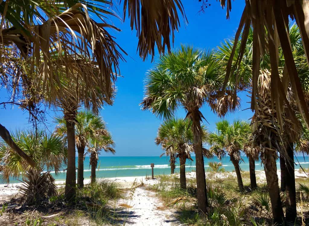 View of the palm tree lined sand and turquoise water at Caladesi Island one of the best secluded beaches near Tampa