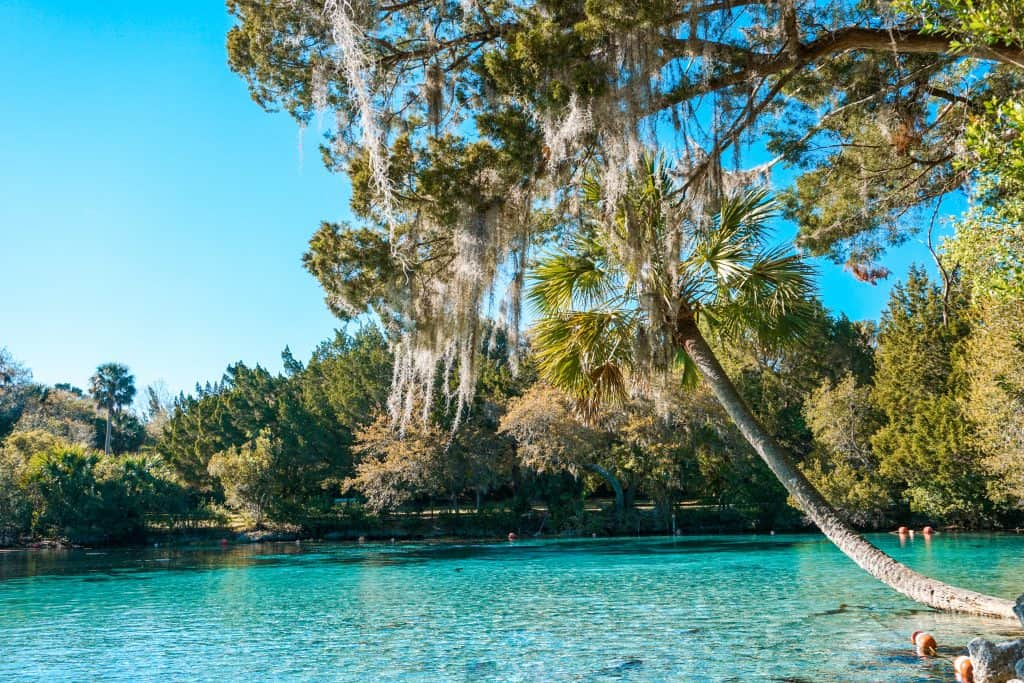 Palm and Oak trees hang over the aquamarine waters of Silver Glen Springs, one of many beautiful Florida springs.
