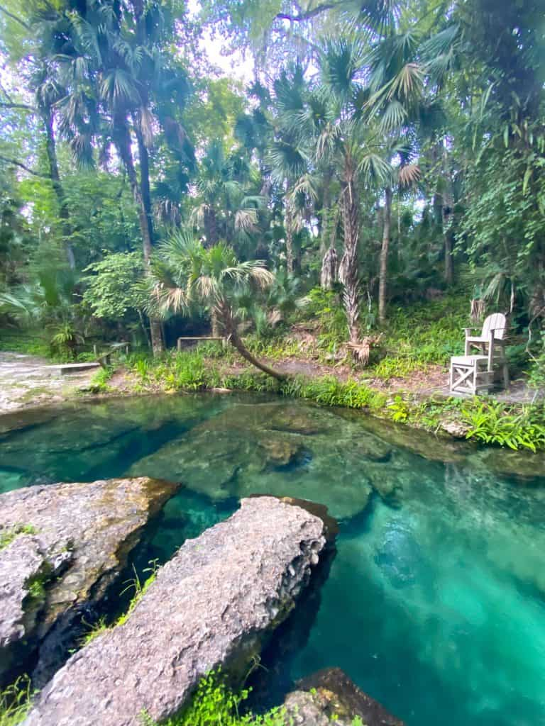 rock springs at kelly park is one of the best springs in Florida