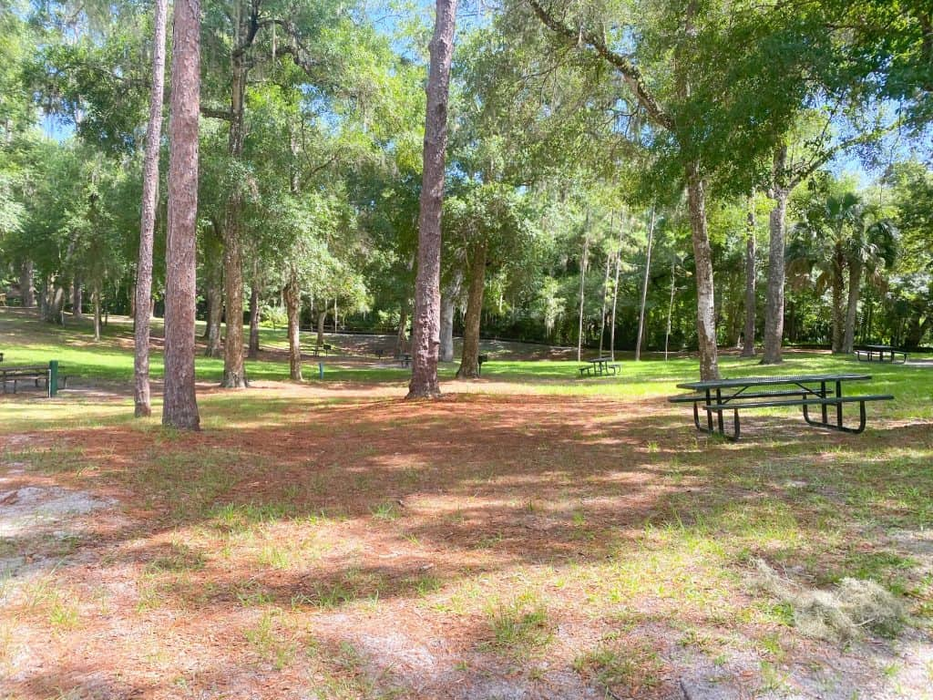 picnic tables at kelly park