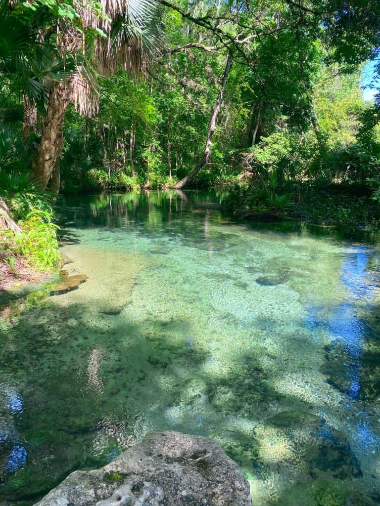 pristine blue water at rock springs florida