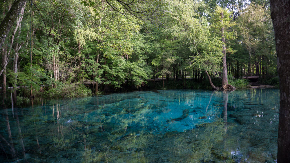 Ginnie Springs is known for its clear and cool waters!