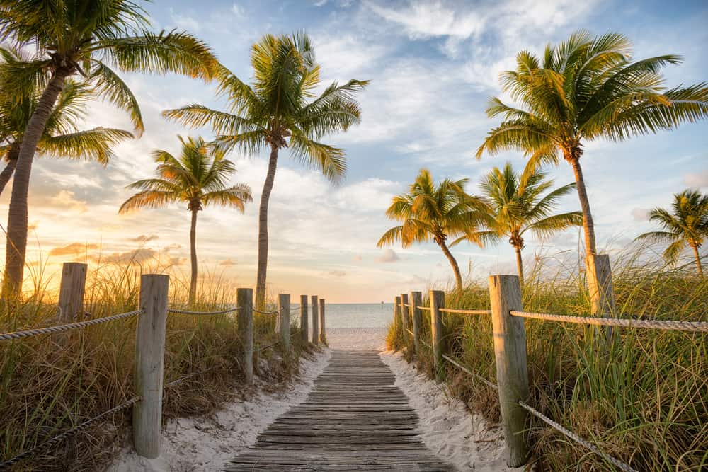path leading to beach surrounded by palm trees at sunrise