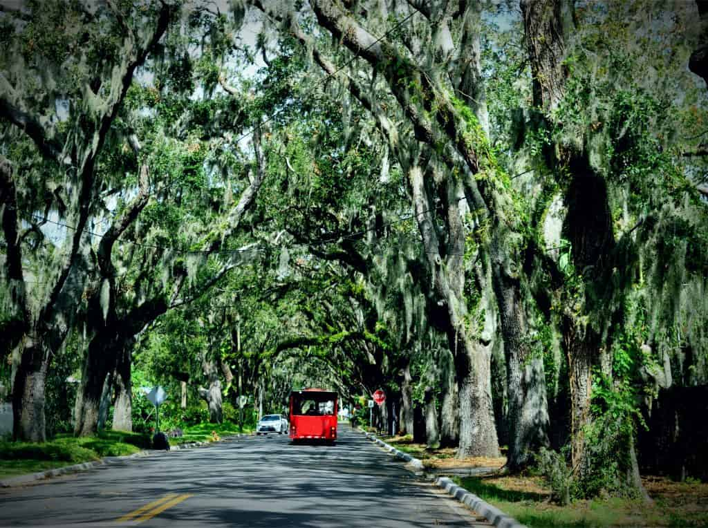 Photo of a trolley under creepy trees to represent a Saint Augustine ghost train.