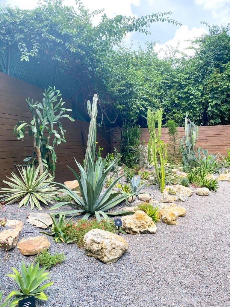cacti growing in Florida botanical garden