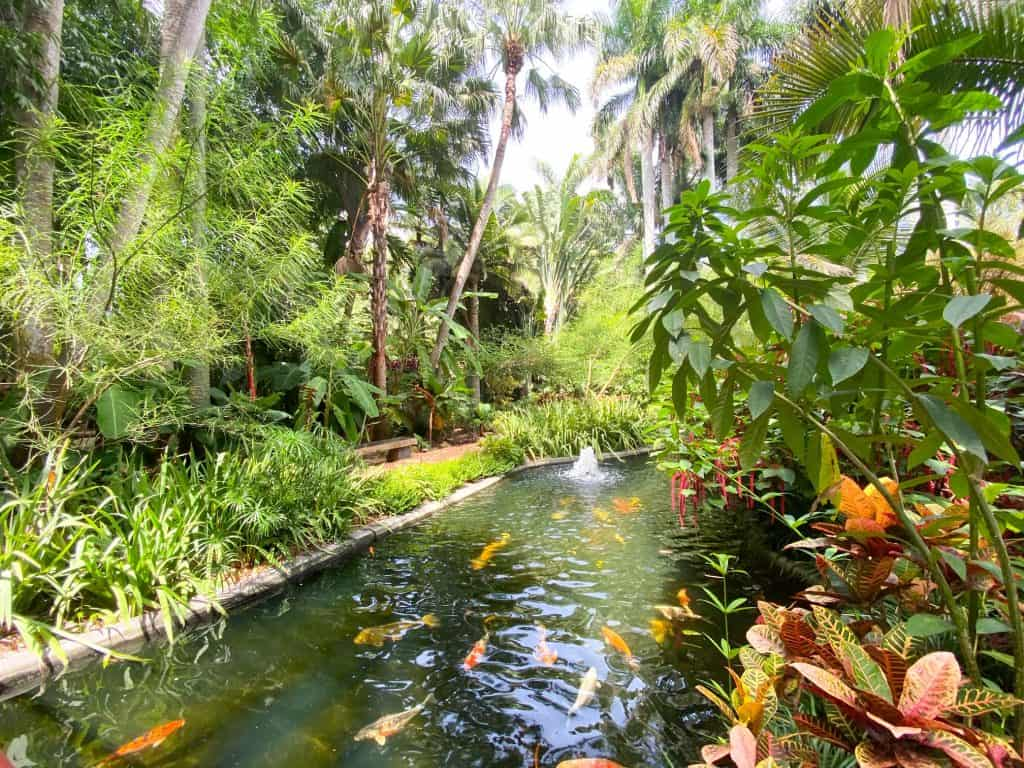 koi pond at the saint petersburg botanical gardens