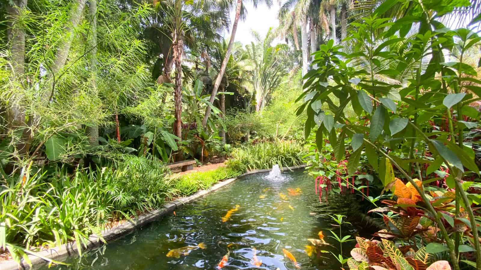 koi poind in saint petersburg sunken gardens