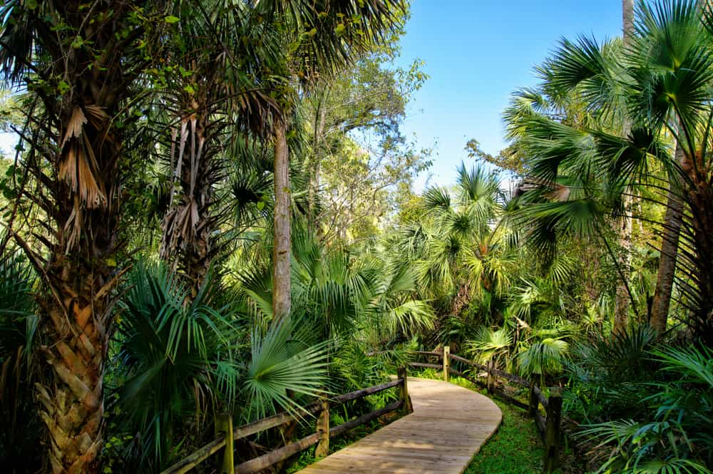 paved pathway surrounded by tall green trees