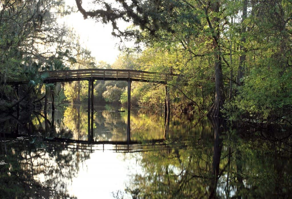 The HIllsborough River State Park, a perfect place to find alligators in Florida.