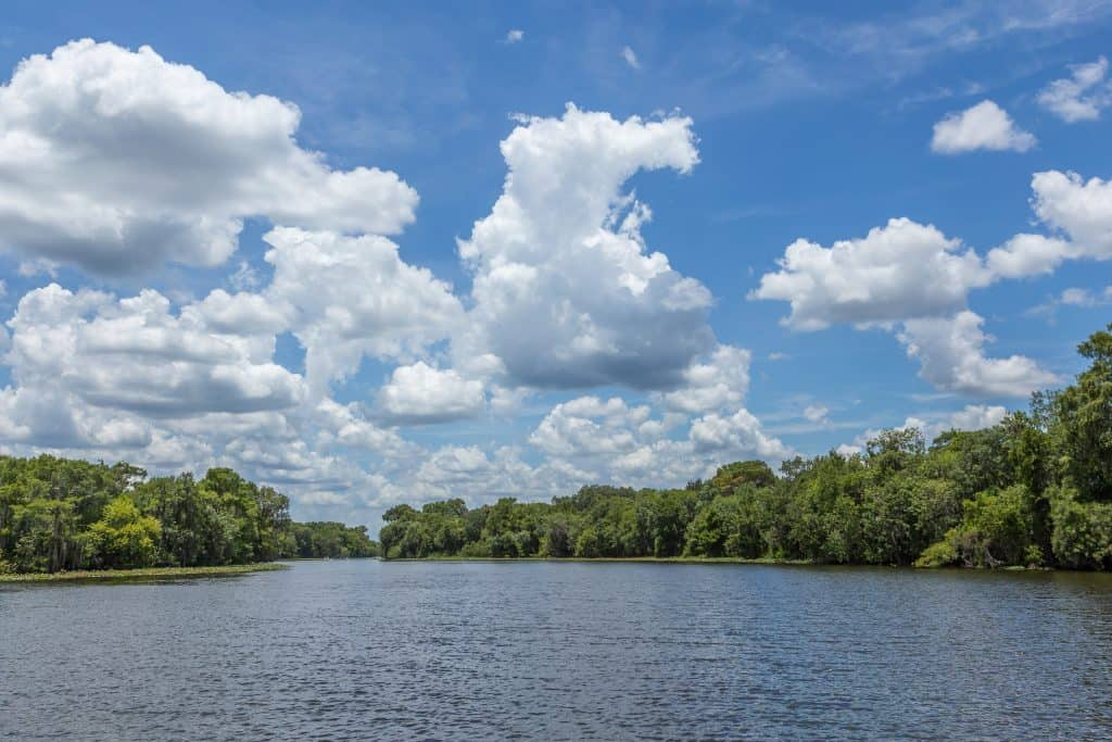 The pristine waters of the St. John's River, a perfect place to see alligators in Florida.