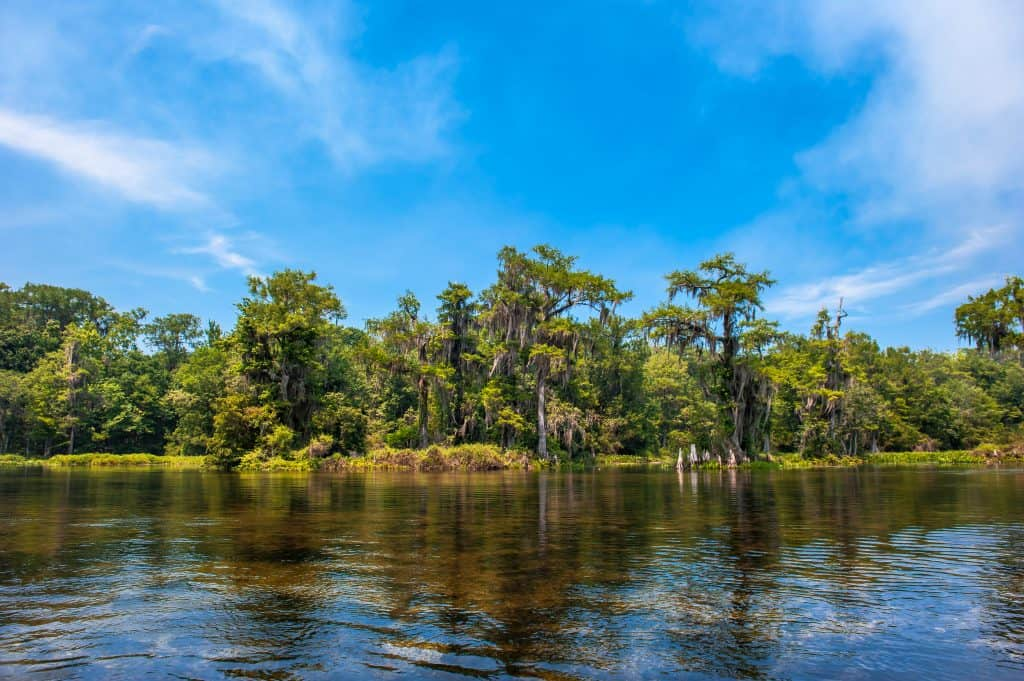 The calm, peaceful, alligator-filled waters of the Wakulla Springs State Park.