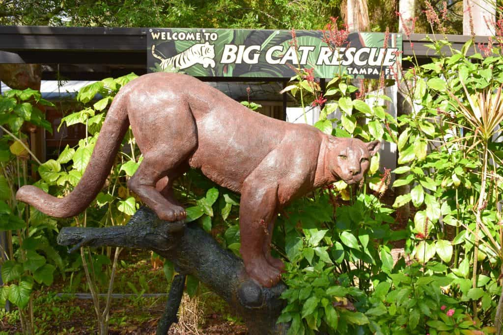 A statue of a leopard perches at the entrance to Big Cat Rescue, one of the best things to do in Tampa.