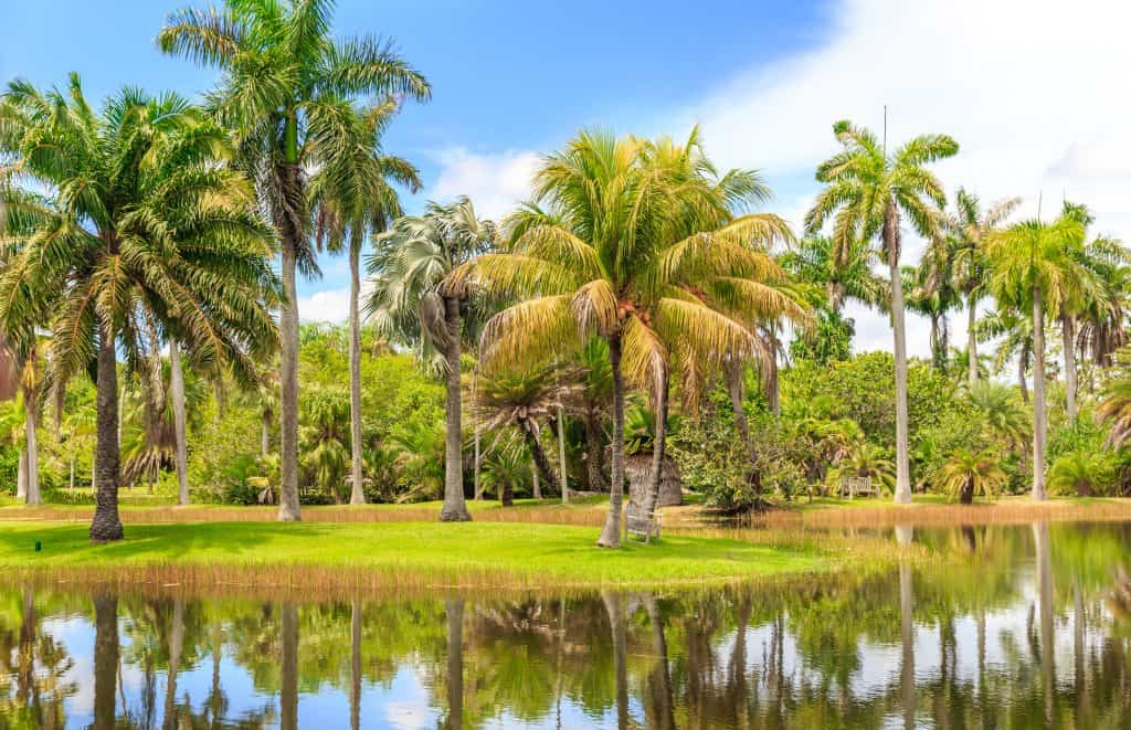 Palm trees reflect in the water at Fairchild Tropical Botanic Garden, a must-visit destination in Florida in fall.