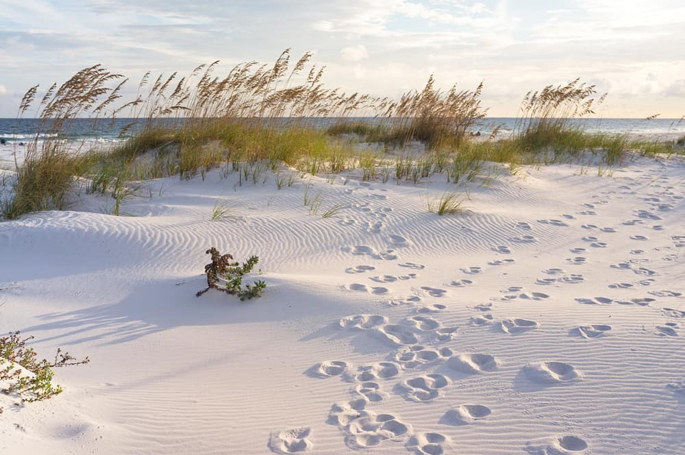 Photo of footprints in the fluffy, white sugar sand at Gulf Islands National Seashore, one of the National Parks in Florida
