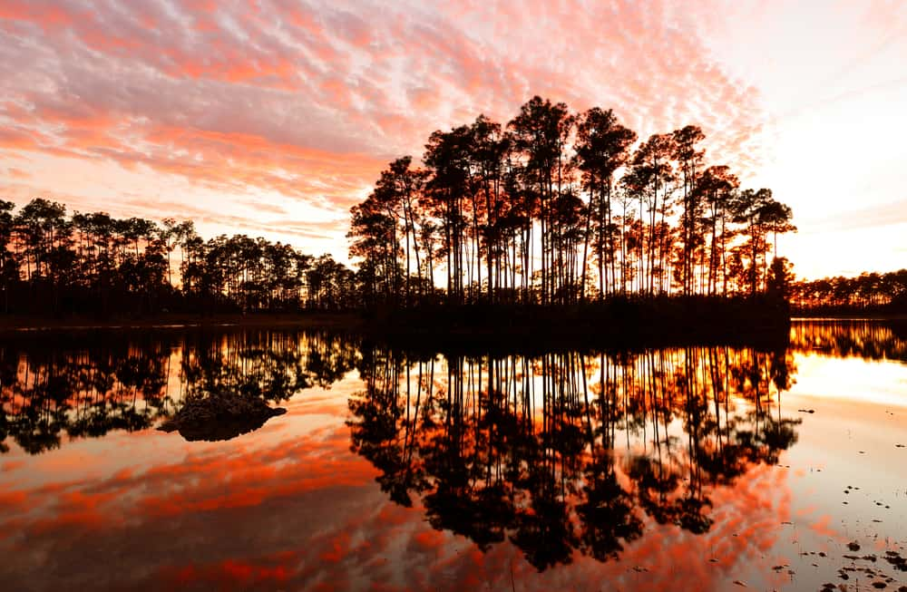 Photo of trees in a beautiful pink sunset at the Everglades National Park, one of Florida's National Parks.