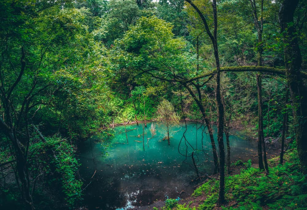 Sink Hole at Devil's Millhopper should be on any outdoor lovers list of things to do in Gainesville Florida.