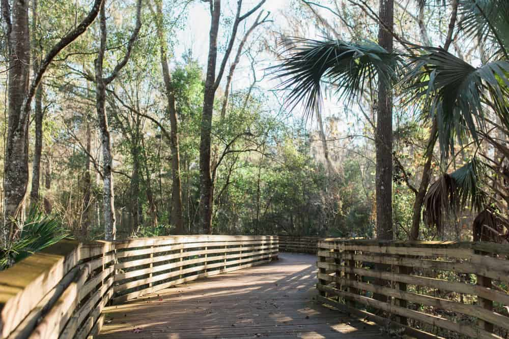 The beautiful wooden boardwalk at Loblolly woods, for outdoor things to do in Gainesville Florida.