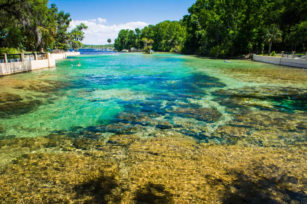 Turquoise clear water at Salt Spring in the Ocala National Forest, a must-visit for families looking for things to do in Ocala.