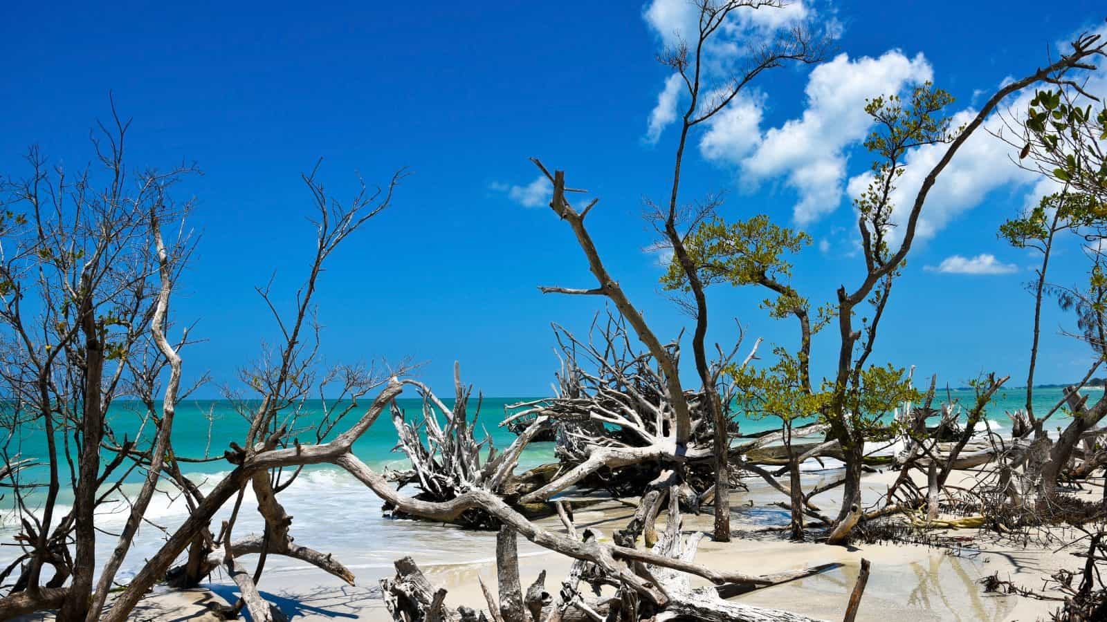 The downed trees and driftwood litter the beaches of Beer Can Island, one of the best things to do in Sarasota!
