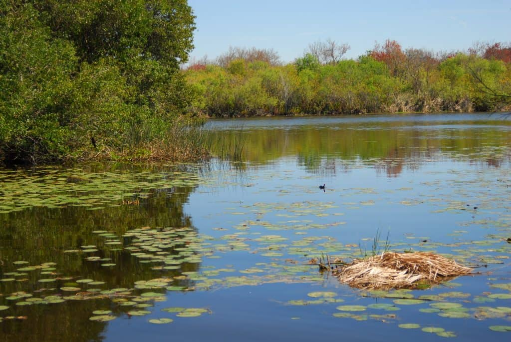 Lake Maggoire at the Boyd Hill nature preserve in St. Petersburg Florida