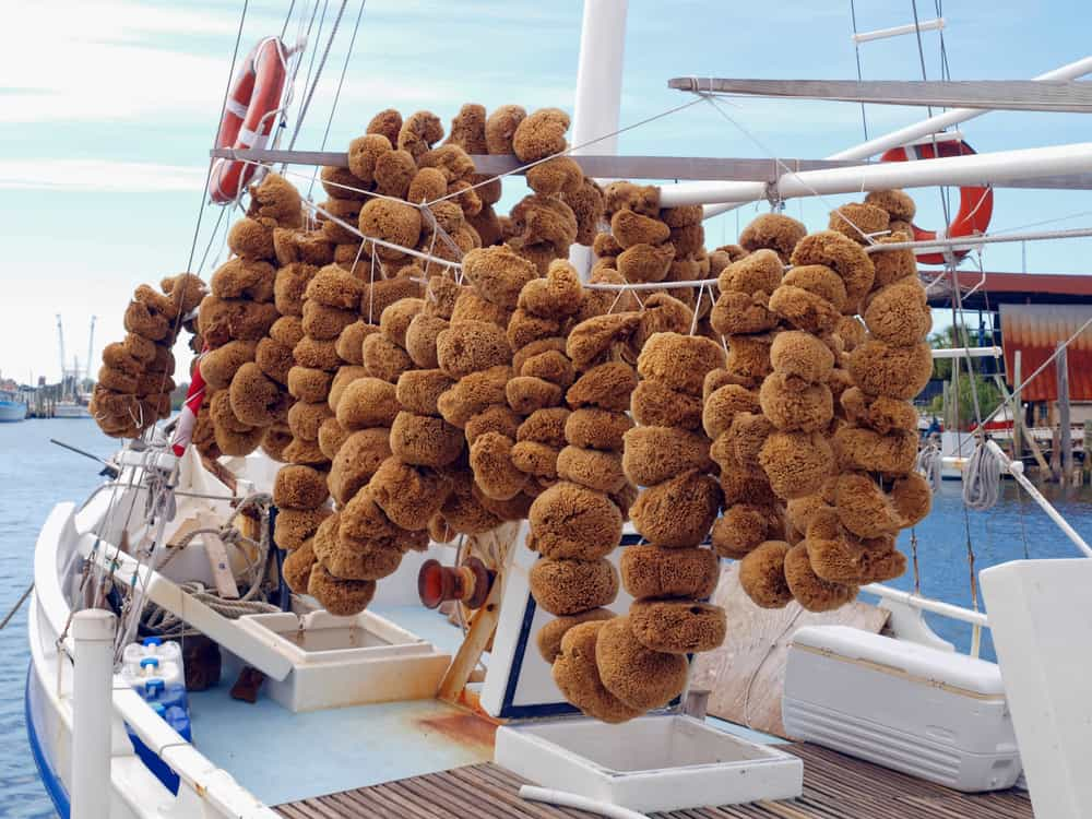 sponges on a boat is one of the best things to do in tarpon springs florida