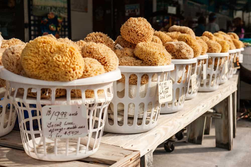 sponges for shopping on the sponge docks in tarpon springs florida