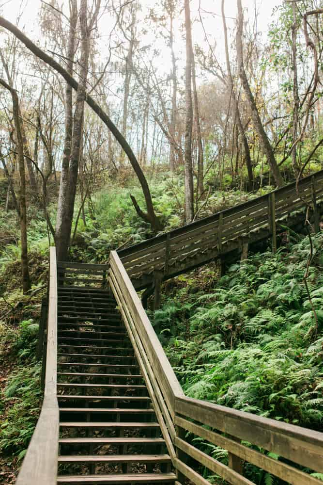 Photo of wooden stairs at Devil's Millhopper, one of the coolest natural waterfalls in Florida.