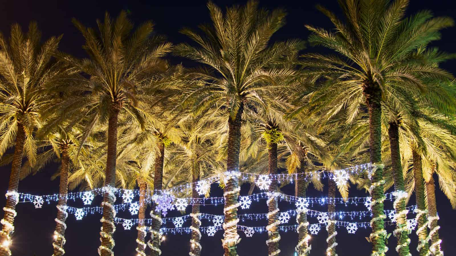 Palm trees are covered in lights during winter in Florida.