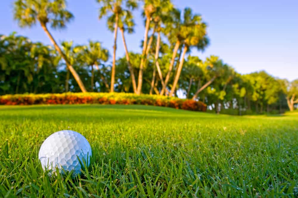 Check out some of the best golf courses in Florida, with green grass and palm trees.