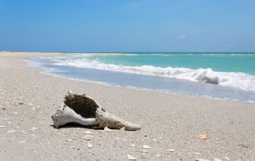 A shell washed up on the shores of Cayo Costa State Park.