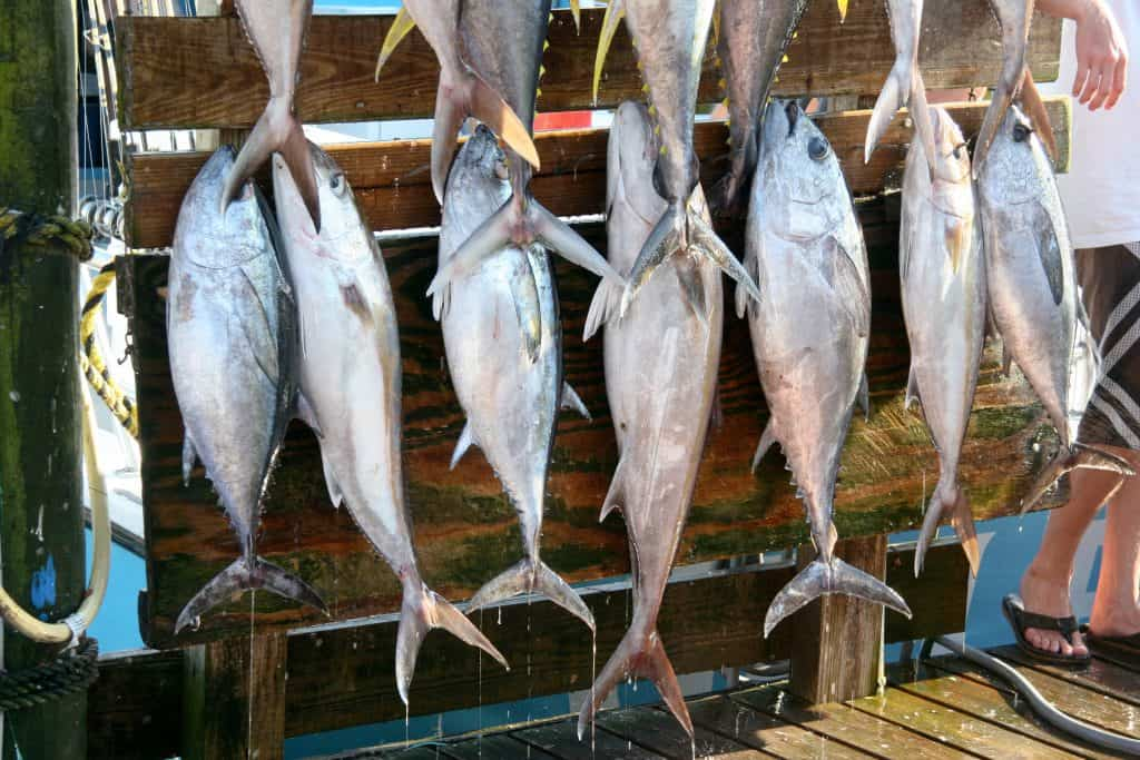 Fishermen display their impressive catches after fishing Choctawhatchee Bay, one of the best things to do in Destin.