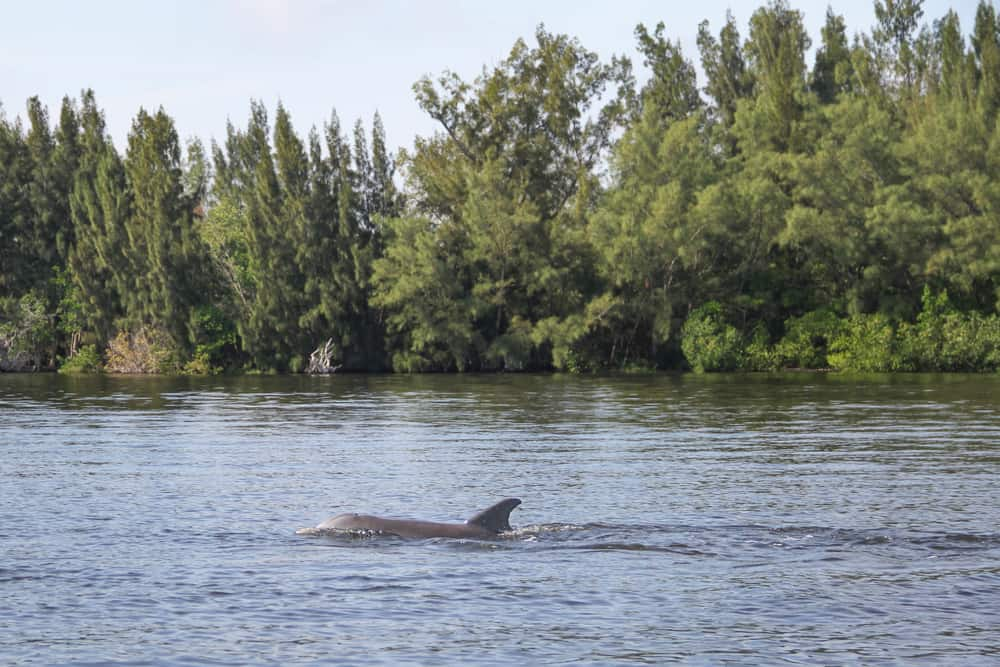 Indian River Lagoon is where the ELC is located and you can learn about wildlife as one of the things to do in vero Beach