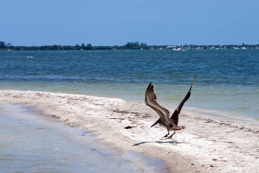Pelican Island National Wildlife Refuge was the first refuge in the United States and is found in Vero Beach.