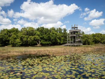 Photo of an observation tower in Florida