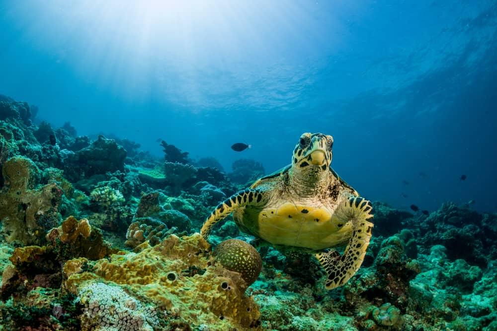 a sea turtle swimming