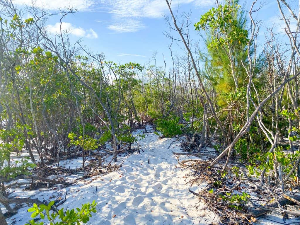 walking through mangroves in Florida