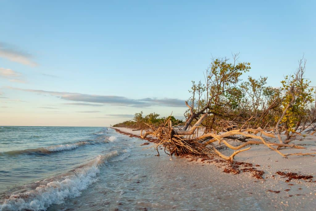 The waves roll in on the shore, the trees, and other brush on the beautiful Honeymoon Island.