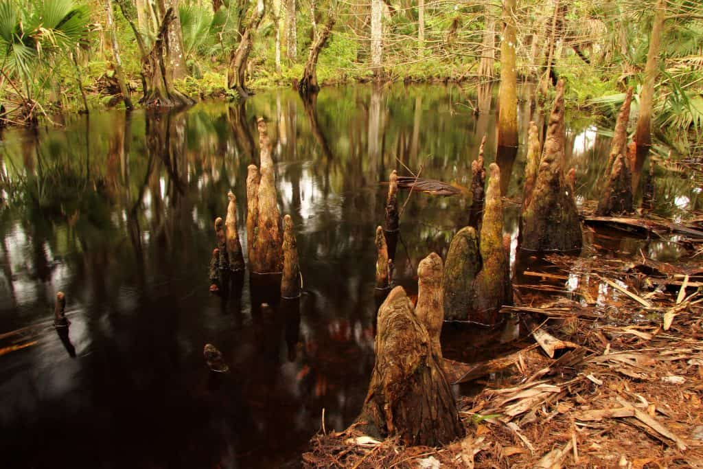 A creek's waters trickle at Jonathan Dickinson State Park.