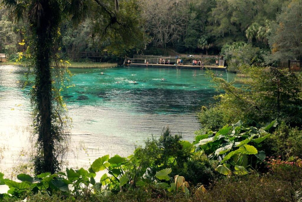 The beautiful clear waters of Rainbow Springs State Park, one of the best places for camping in Florida.