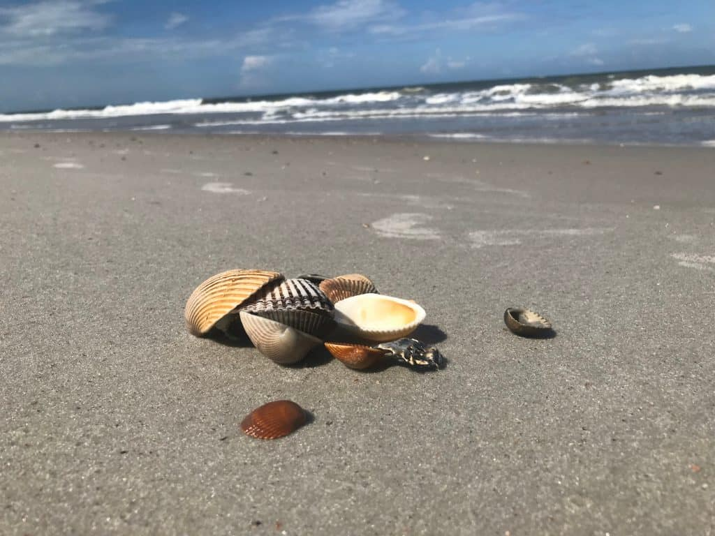 Kids will love the shells on the shores of Fernandina Beach, one of the best family beaches in Florida.