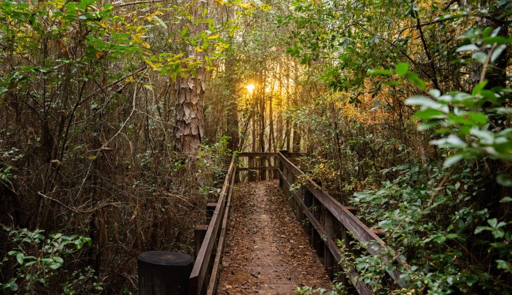 The sun peeks through the longleaf pine forest on the Florida Trail in Blackwater River State Forest, one of the best trails for hiking in Florida.