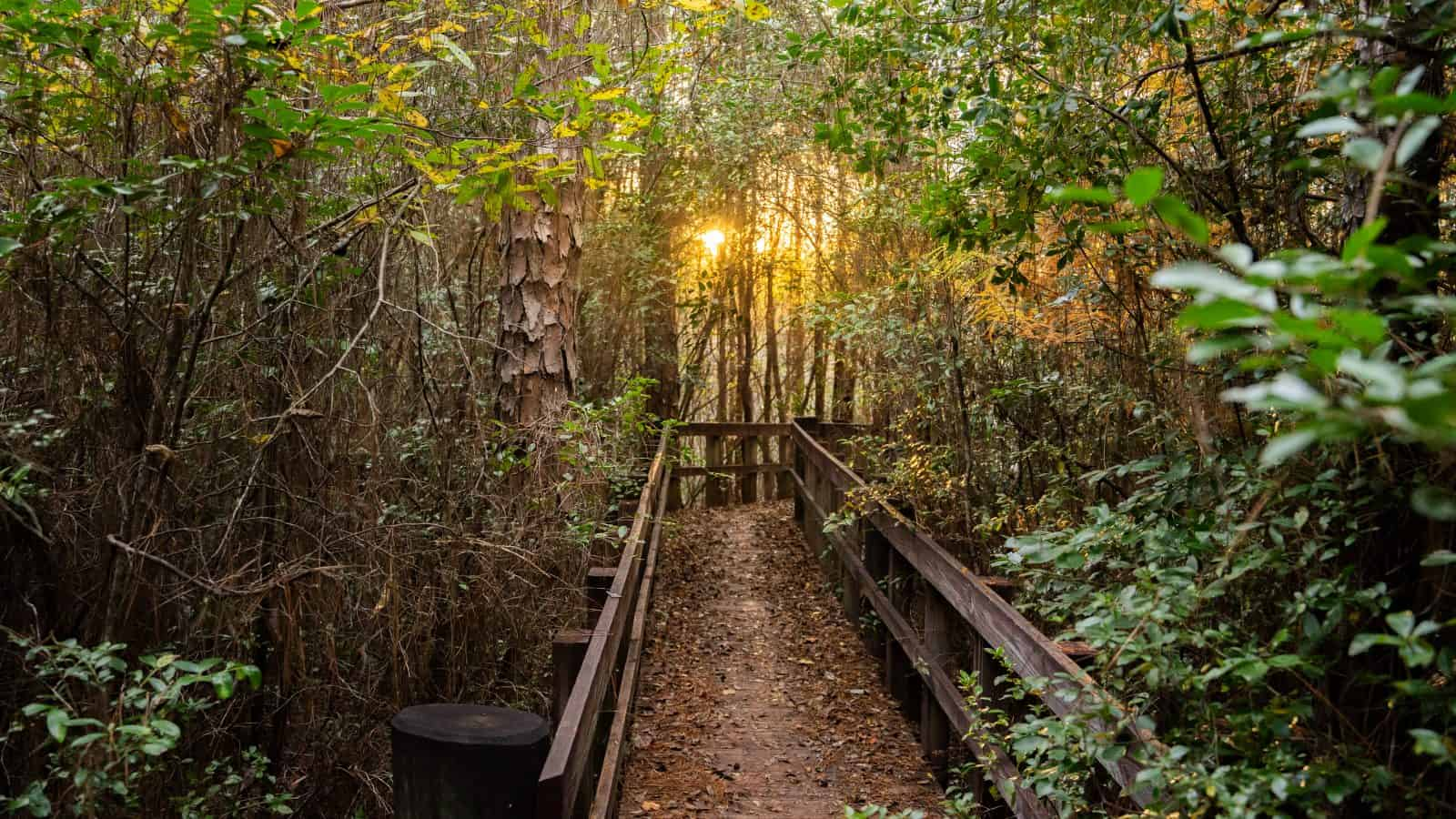 blackwater trail is one of the best hiking in florida