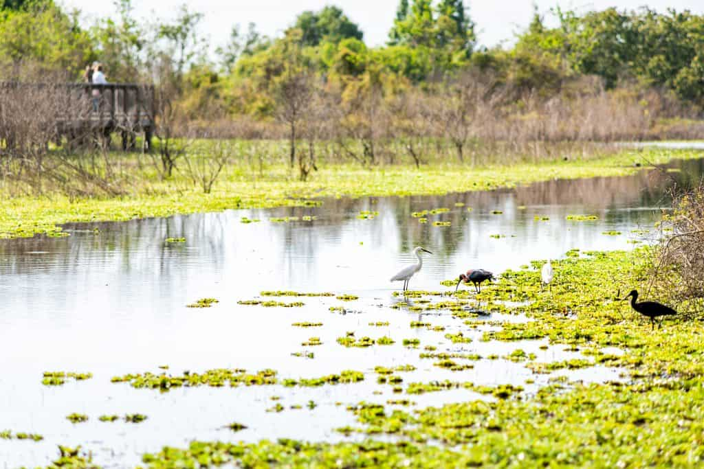 The prairies along the Prairie Paynes Loop Trail are flooded with wading birds, one of the best trails for hiking in Florida.